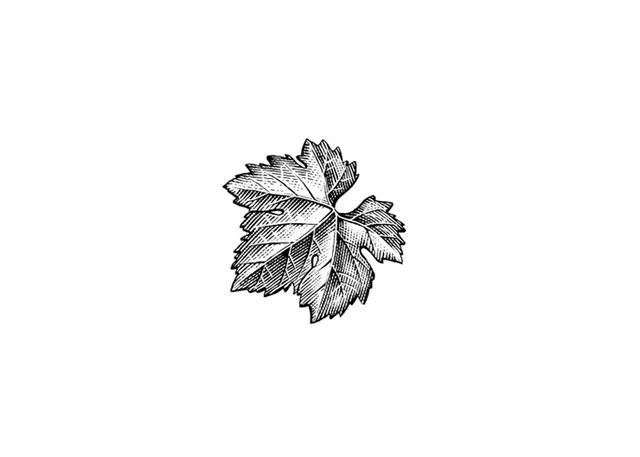 Grape-Leaf-Icon